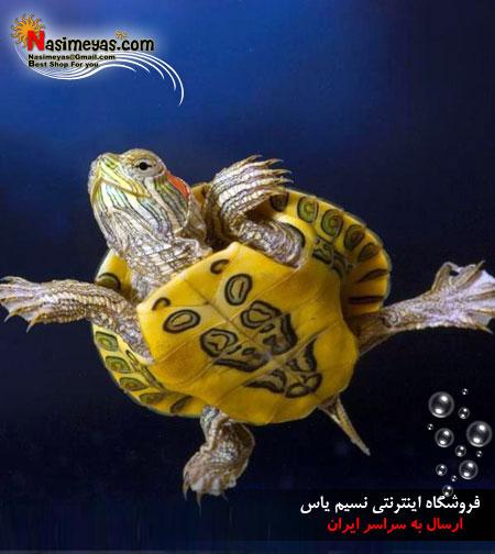 فروشگاه آنلاین نسیم یاس - محصول -لاکپشت گوش قرمزفروش لاکپشت گوش قرمز جوان