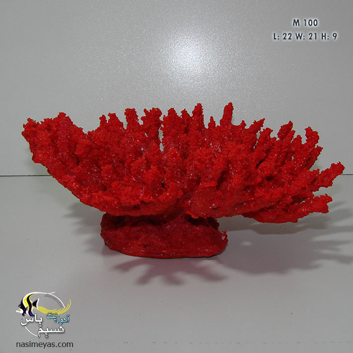 Table Acropora Coral